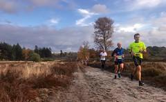 haarlerbergloop 10 km (31)
