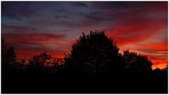 October skies (frankdorgathen) Tags: alpha6000 sony sony35mm hochdahl erkrath landschaft landscape baum tree silhouette natur nature burningsky himmel sky sonnenuntergang sunset
