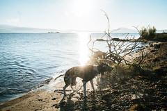Just shake it off! (mripp) Tags: art vintage retro old dog animal hund water sunrise photography weloveourdog sony alpha 7rii voigtlander nokton 40mm f12