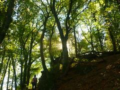 Lavaklippen-Buchenwald (Jörg Paul Kaspari) Tags: wanderung wandertour herbst autumn fall 2018 diebergkraterseetour lava lavaklippe lavaklippen buchenwald mosenberg lavaklippenbuchenwald