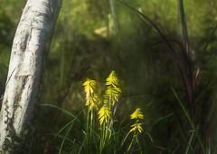 Hidden (Sarah Fraser63) Tags: yellow plants flower nature trees green