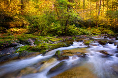 Flowing Autumn (Adrian Klein) Tags: adrianklein creek fallcolor forest naturephotography siouxon washington yellow green moss slowshutter gettingwet coolautumnair refreshing leaves flowing fresh landscape nature hikinglocations