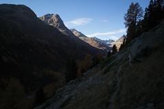 Val Bever in the dark (Toni_V) Tags: m2409561 rangefinder digitalrangefinder messsucher leicam leica mp typ240 type240 28mm elmaritm12828asph hiking wanderung randonnée escursione valbever alps alpen trail wanderweg sentiero graubünden grisons grischun herbst atun autumn switzerland schweiz suisse svizzera svizra europe spinaspreda ©toniv 2018 181020 fuorclacrapalv
