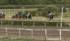 Fort Erie Racing (rumimume) Tags: potd rumimume 2018 niagara ontario canada photo canon 80d forterie racetrack horse thoroughbred race outdoor day summer turf