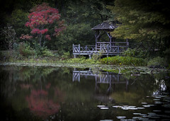 Time is What We Make of It (Life_After_Death - Shannon Renshaw) Tags: canon canoneos canoneos50d 50d eos dslr canondslr eosdslr canoneos50ddslr tree red autumn fall pond water reflection gazebo bench wood landscape dreamy time covered htmt
