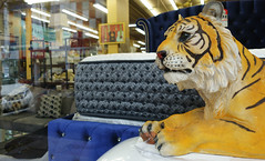 All sales final (simply innocuous) Tags: mtvernon mountvernon tiger resale bed mattress store retail guitar painting