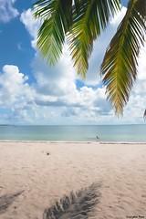 Every time (gusdiaz) Tags: hobie park palms palmeras relaxing nature naturephotography fuji fujifilm arena mar sal tropico arbol cielo nubes clouds vacation vacaciones serene uplifting gorgeous