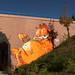 Garfield #Fake