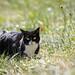 cat on a meadow