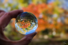 Herbstkugel (sirona27) Tags: glaskugel kugel herbst herbstfarben laub bunt farbig baum hand spieglung