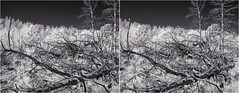 Infrared Deadfall Il (turbguy - pro) Tags: 3d crosseye stereo infrared bw medicinebownationalforest