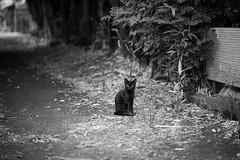 猫 (fumi*23) Tags: ilce7rm3 sony 85mm fe85mmf18 sel85f18 emount animal a7r3 alley street katze neko cat chat gato bokeh dof ねこ 猫 ソニー