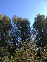 Autumn, feels like summer (Tompouce6) Tags: trees bomen autumn herfst warm sunnyoctober october oktober