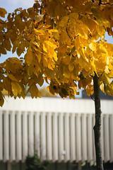 Green Bay Fall Colors-6