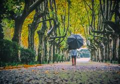 Pluie d'automne .. (Dare2drm) Tags: pluie rain parc arbre djfotos digitalwork pse inexplore parapluie umbrella creativephotography