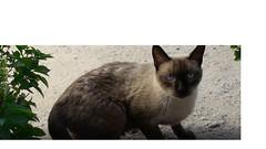 Gato (andrademartin65) Tags: gato cat homework