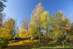 Autumn 2018 (martindjupenstrom) Tags: canoneos6d bluesky eos6d canon trees stockholm velamsund nacka fall colours colors sweden höst autumn