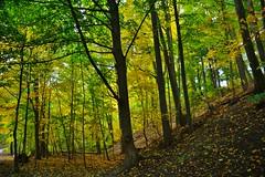 Beltline Trail, Mud Creek, Moore Park Ravine, Toronto, ON (Snuffy) Tags: toronto ontario canada beltlinetrail mudcreek mooreparkravine fall autumn seasons fallcolours