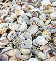00053834 (aniaerm) Tags: sea coastalfinds sand