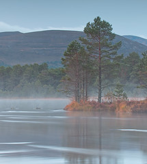 A Misty Morning (captures.in.time) Tags: fog rain mist morning cold dull loch lake water forrest mountain hills cairngorms scotland national nationalpark cairngormsnationalpark aviemore morlich quiet reflection reflections 6stop lee canon 6d landscape landscapephotography photography scots pine trees