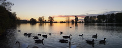 Pano of Sunrise Across the Pond in Harold Park (Mel_is_Moving) Tags: water bradford epl6 olympus pen sky trees clouds outside microsoftice ducks reflections outdoor panorama pond tree birds park sunrise westyorkshire uk