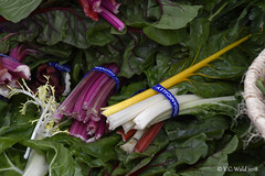 Add a little color to your diet (V.C. Wald) Tags: santafenewmexico tamron16300mmdiiipzd saturdayfarmersmarket swisschard
