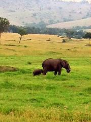 Kenya, Masai Mara National Reserve. Elephant (dimaruss34) Tags: newyork brooklyn dmitriyfomenko image sky clouds kenya svetlanafomenko masaimaranationalreserve animal grass trees field elephant
