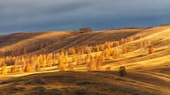 Солнечная река#maksileni, #Максименко_Леонид, #Leonid_Maksimenko, #своифото, #пейзаж, #природа, #утро, #рассвет, #дерево, #натура, #восход, #sunrise, #nature, #tree, #Landscape, #sun, #туман, #лучи, #foggy, #природа, #небо, #небоголубое, #сониальфа, #сони (ЛеонидМаксименко) Tags: maksileniмаксименколеонидleonidmaksimenko своифотопейзажприродаутрорассветдеревонатуравосходsunrisenaturetreelandscapesunтуманлучиfoggy природанебонебоголубоесониальфасониа6000sonyalphasonya6000natgeorunatgeorussianatgeoyourshotetonashural
