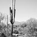2018 Southwest US-207-Saguaro NP AZ