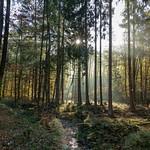 Herbstmorgen im Sauerland thumbnail