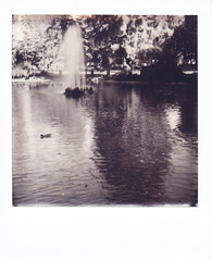 Autumn Polaroid Week 2018 - Salsomaggiore Terme, Italy (igorigor88) Tags: salsomaggiore terme salsomaggioreterme parma italy northernitaly northitaly north italia norditalia emilia romagna emiliaromagna parco park garden giardino anatra duck animali animals acqua water nature natura sun sole riflesso reflex reflection polaroid impossible project analog analogico film pellicola rullino bianco nero black white bn bw blackandwhite biancoenero october ottobre fall autunno autumn