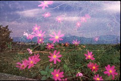 (✞bens▲n) Tags: pentax lx provia 100f at200 fa 31mm f18 limited film analogue slide multiexposure flowers yamansahi japan landscape mountains