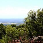Oltre la pineta - Beyon the pine forest