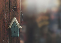 home is where I hang my treasures (rockinmonique) Tags: 52in52 friend gift birdhouse tiny doorknob antiquecabinetwhereistoreandshowmybettyboopcollection wood macro bokeh light green brown gold moniquewphotography canon canont6s tamron tamron45mm copyright2018moniquewphotography