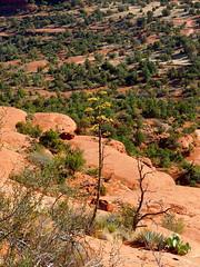 P6300176 (carriemoranphotos) Tags: arizona sedona redrocks trees travel sunrise sunset red usa roadtrip