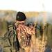 hunter in morning sun 4