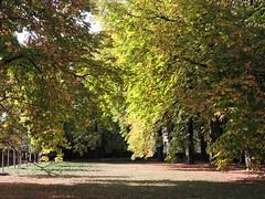 DSCN6404 (keepps) Tags: switzerland suisse schweiz geneva genève fall autumn tree