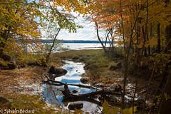 Brèche sur le fleuve (Sylvain Bédard) Tags: lieux maraisléonprovancher automne autumn fall landscape