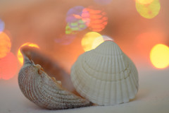 Orange bokeh (adelina_tr) Tags: lifeisarainbow orange bokeh shells macro