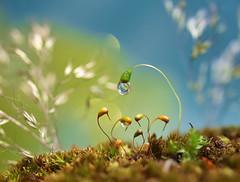 The Nursery (miss gecko) Tags: nursery tending caring moss waterdrop garden macro spooktacular smileonsaturday