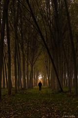 Alone (AvideCai) Tags: avidecai tamron2470 paisaje arboles vertical otoño gente