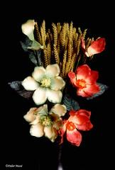Bouquet (didier95) Tags: bouquet bouquetdefleurs fleur