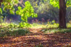 Autumn forest (B. Rad) Tags: forest autumn colors light leaves осень tree biometar120mmf28