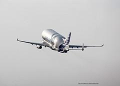 BelugaXL_Airbus_F-WBXL-007 (Ragnarok31) Tags: airbus a330 a330f fwbxl belga xl cargo a330743l