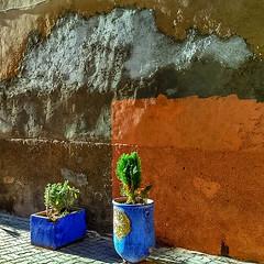 IMG_20180301_095113_HDR_1519996058246.jpg (vmolchan) Tags: marrakesh marrakeshsafi morocco ma