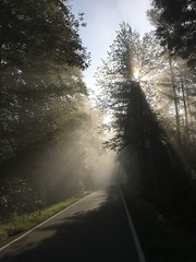 IMG_2970 (eduard43) Tags: natur nature rafz sonne sun waldwege wald forest forestpaths schweiz 2018 iphone
