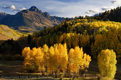 Gold Rush (pdxsafariguy) Tags: colorado autumn forest landscape usa mountain fall aspen sky tree yellow mountains valley foliage orange tranquil trees alpine telluride sanjuanmountains rockymountains clouds aspens stream mtsneffels ridgway tomschwabel