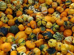 DSC07732 (kurmanstaff) Tags: kurmanphotography halloween dusselfarm kentohhalloween halloween2018 pumpkinsandsquash outdoorfestival