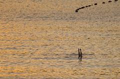 game over (eduardo menéndez) Tags: mar sea legs swim nadar sunset atardecer golden hour gold playa beach donosti summer verano minimal