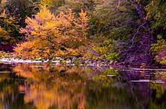Walk Along (114berg) Tags: 02october18 hennepin canal fall color geneseo illinois